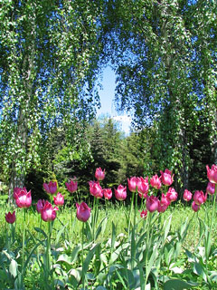 botanical garden plants, including pink tulips