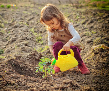 little girl watering a freshly-planted tomato plant